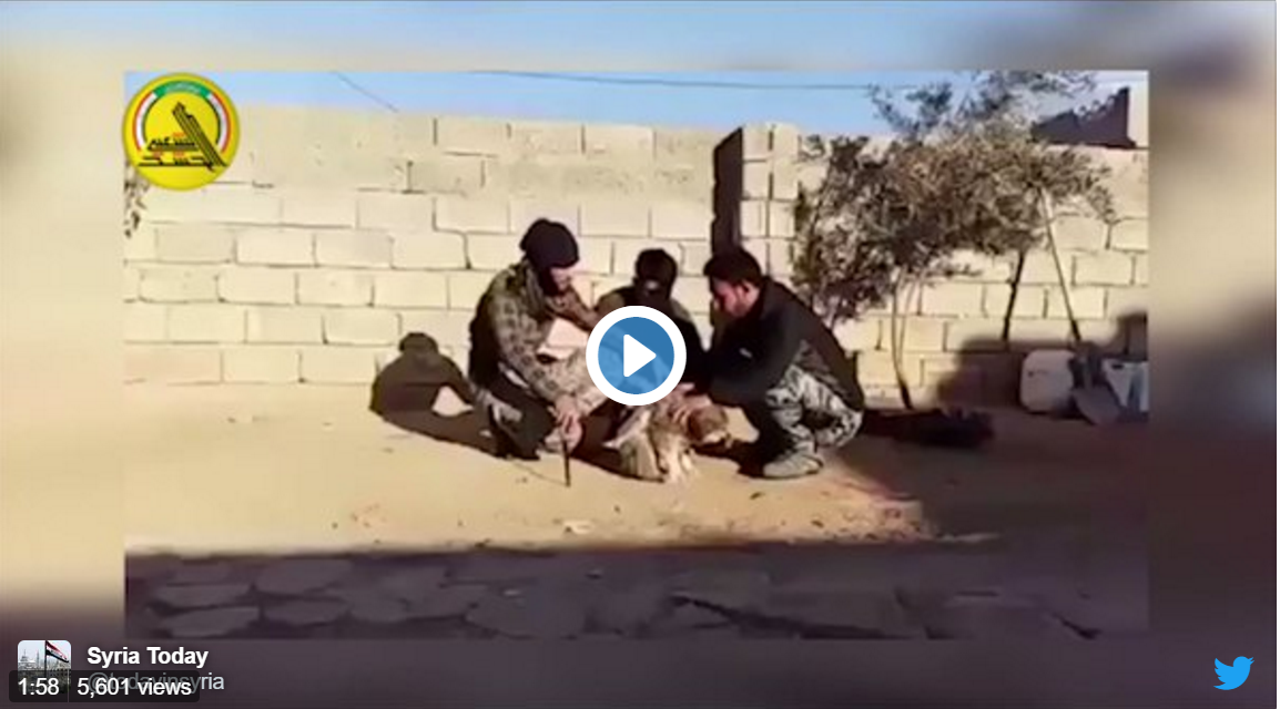 ISIS Straps a Suicide Bomb Belt to a Puppy