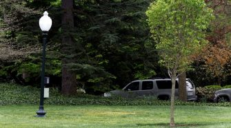 Tree Planted at White House by Trump and Macron Disappears